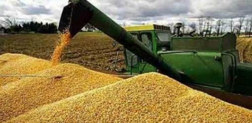 LO ANUNCIÓ CRISTINA: Argentina marca una nueva cosecha histórica de granos con 105,4 millones de toneladas