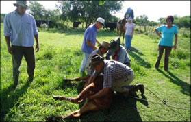 Sauce de Luna: Secuestran vacunos en campos donde tiene su hacienda el Juez de Paz
