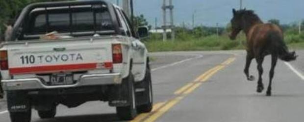 FEDERAL: Preocupa la presencia de animales sueltos en rutas del Departamento