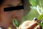 El gobierno realizará la denuncia penal: Detectan casos de trabajo infantil y adolescente en Concordia