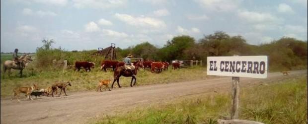 Brigada de Abigeato de Federal: Recuperan vacunos y otros enseres