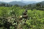 Colombia bate un nuevo récord de hectáreas destinadas al cultivo de coca