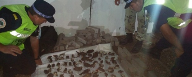 Viajaba por la Ruta 12 con 145 aves encerradas en un bolso: 85 murieron