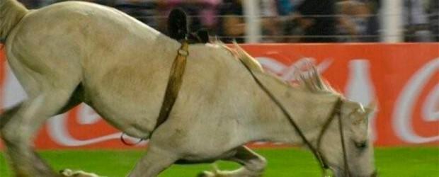 Proteccionistas presentaron denuncia Jineteada en Jesús María: Practicaron eutanasia a un caballo tras grave caída