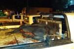DPTO. FEDERAL: La policía secuestró animales eviscerados y armas