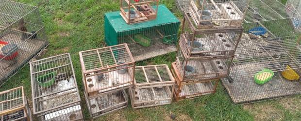 26 detenidos: Desarticularon banda dedicada al tráfico de animales que operaba en Entre Ríos