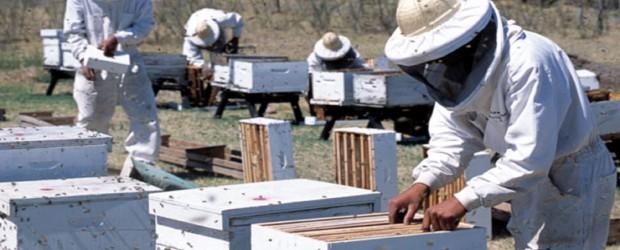 Producción: Cinco empresas entrerrianas fueron habilitadas para exportar miel a China