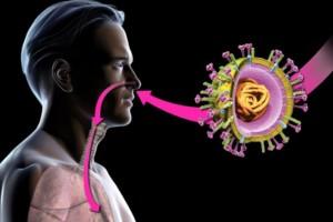 La OMS advirtió que en el futuro habrá nuevos virus animales que afecten a las personas